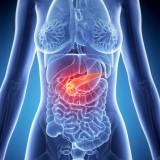 Pankreas – podžalúdková žľaza