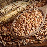 Špalda (špaldová pšenica) – kráľovna obilnín?