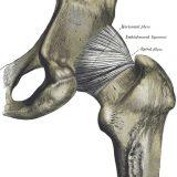 Operácia bedrového kĺbu