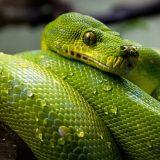 Uhryzol vás had? Čo robiť?