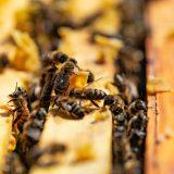 Liečivá sila včiel pomáha aj s ťažkými diagnózami