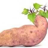 Batáta – sladký zemiak s vysokou hladinou betakaroténu