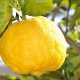 Jeden citrón denne a choroby u vás nemajú šancu!