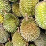 Durian – najsmradľavejšie i najchutnejšie ovocie zároveň!