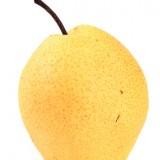 Hruška nashi – šťavnatá ako broskyňa, chrumkavá ako jablko