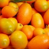 Vajcovitý kumkvát – kedysi okrasná rastlina, dnes uznávaný citrus