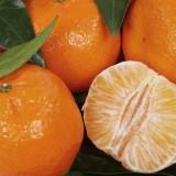Mandarínka – vitamínová bomba nielen na Mikuláša
