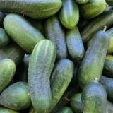 Uhorka – omladí vašu pleť a pomôže schudnúť