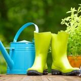 Bylinky do záhrady I.: bazalka, mäta, šalvia, tymian, rozmarín